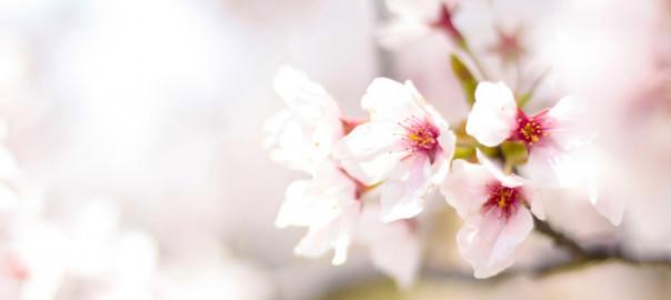 spring-2497200_1920